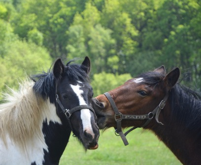 horses-2658713_1920